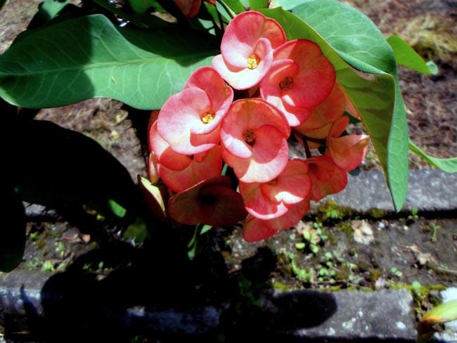 Цветы в Убуде