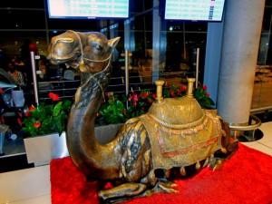 Верблюд в аэропорту