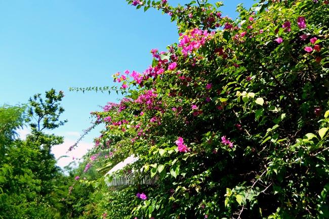 Цветы на Бали