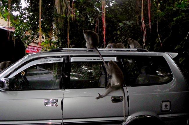 обезьяны леса Убуд