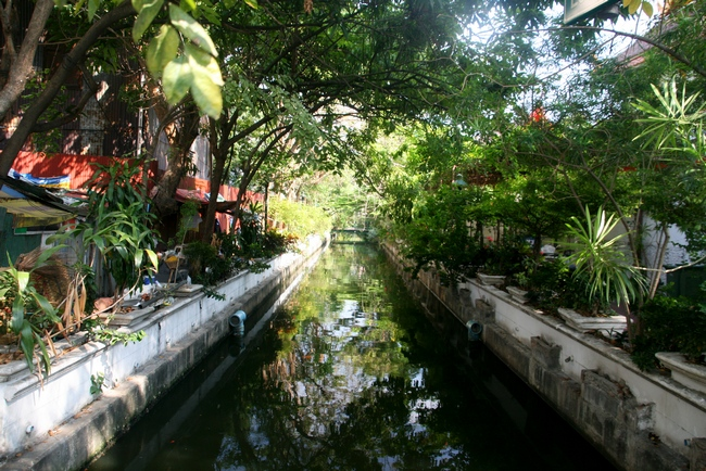 цветы города Бангкок
